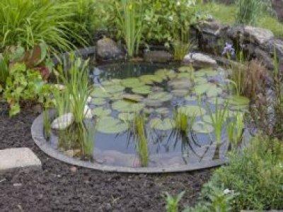 Gartenteich Bauen Von Fisch Und Pflanze Bis Zur Pflege