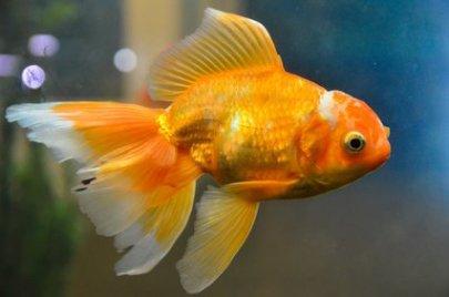 Gartenteich bauen von fisch und pflanze bis zur pflege for Rotfeder gartenteich